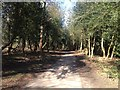 SP1096 : Path in Sutton Park by Dave Thompson
