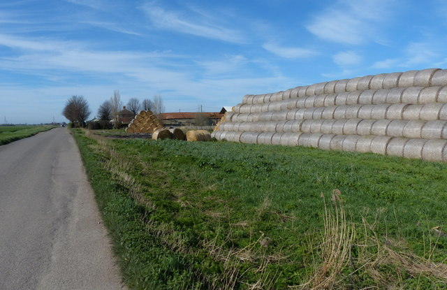 Bales along Outwell Road at Mortons Farm