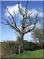 TL6732 : Dead Tree by Keith Evans