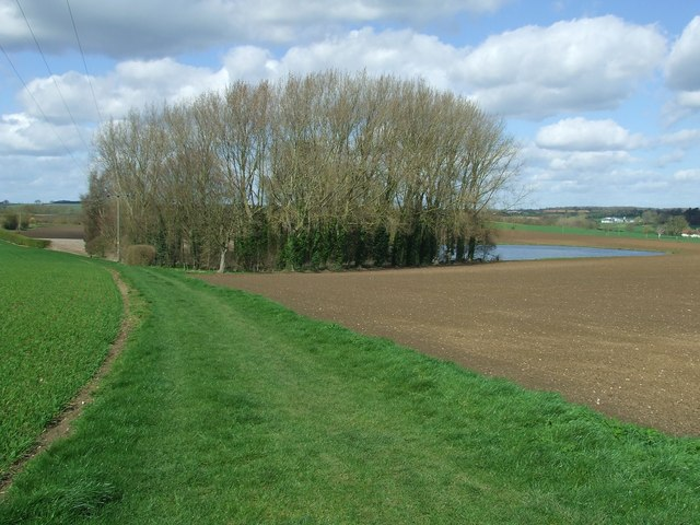 Footpath And Copse