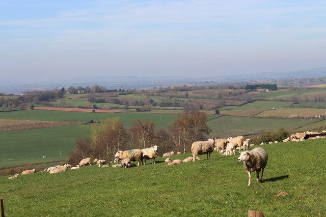 Lambing time at Haygrove Farm