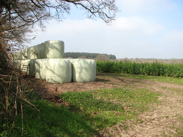 A stack of silage bales by Bungalow Farm