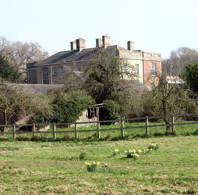 Daffodils in a paddock by Wramplingham Hall