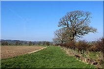 SD6074 : Field beside Coneygarth Lane by Chris Heaton