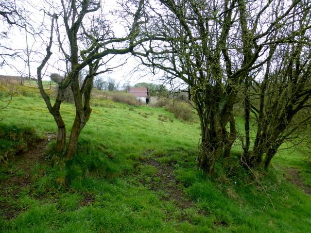 A gap in the hedge, Bracky