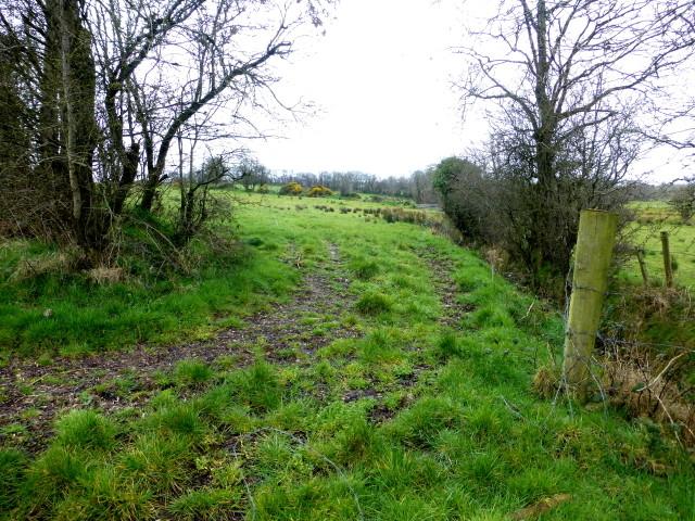 A gap between fields, Bracky