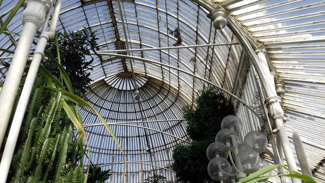 the roof structure of the palm house of     u00a9 peter evans