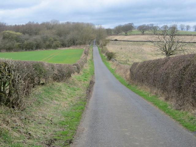 Road towards Black Plantation