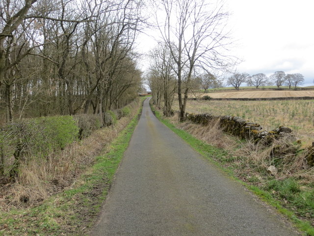 Road at Black Plantation