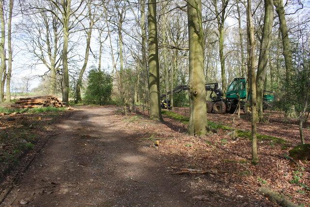 Logging in Nott Wood
