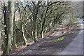 ST2393 : Raven Walk, Cwmcarn Forest by M J Roscoe