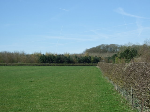 Grazing and hedgerow