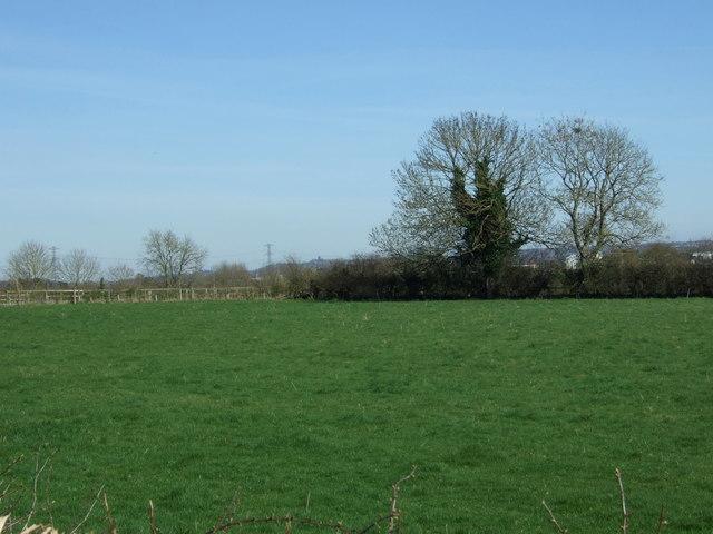Grazing off Dunstall Road