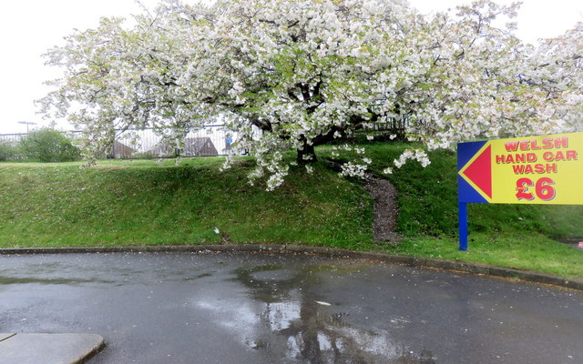 """Desire path"" into Withybush retail park (1)"