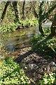 SX1459 : River Lerryn by Derek Harper