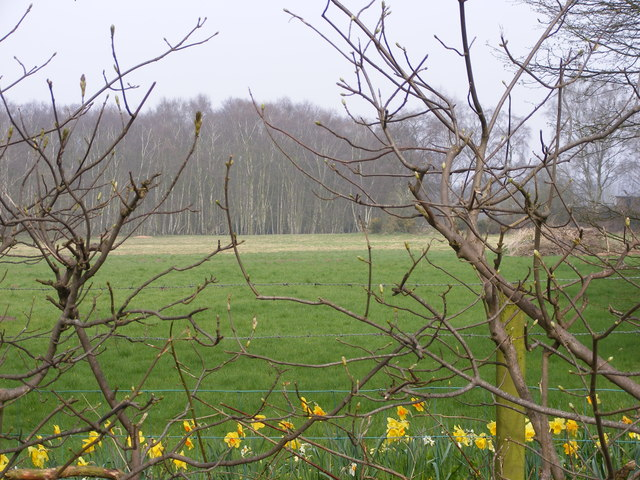Himley View