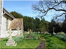 SU8518 : Spring in Bepton Churchyard (ii) by Basher Eyre