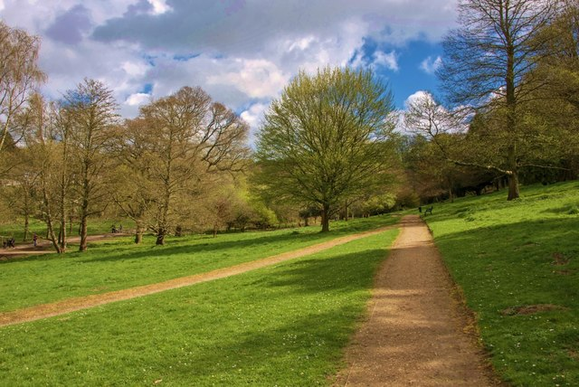 Yeovil Country Park: Paths converge