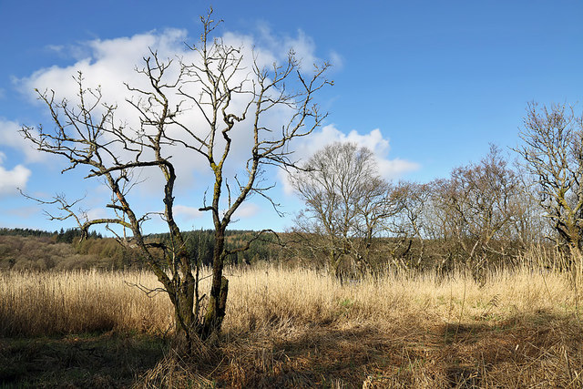 Trees and vegetation by Woodhall Loch