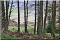 NT2438 : Gate to Cademuir Forest by Jim Barton