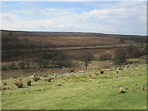 SE8499 : View across Eller Beck to the North Yorkshire Moors Railway by Jonathan Thacker