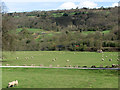 SK3056 : Sheep grazing on Cromford Meadows by John Sutton