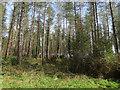 TF7807 : Drymere Plantation by Hugh Venables