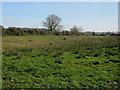TG0140 : Damp field near Langham by Hugh Venables