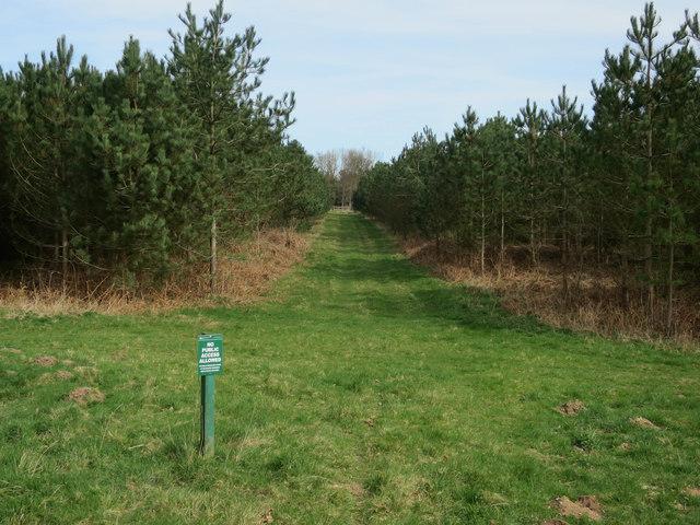 Conifer plantations, Cockleycley