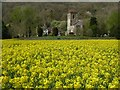 SO7740 : Oilseed rape and Little Malvern Priory by Philip Halling