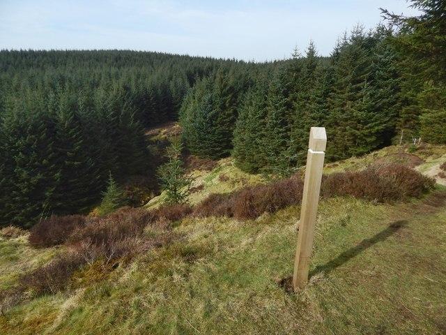 Marker post beside a path