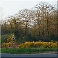 TQ4165 : Woodland and gorse on Hayes Common by Christopher Hilton