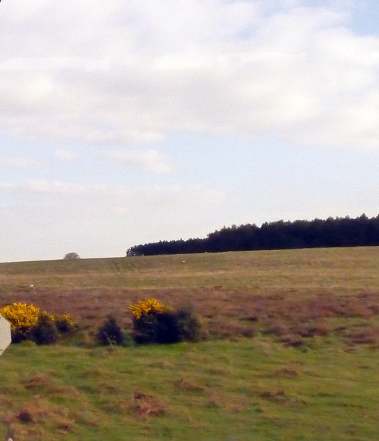 Mixed heathland and woodland terrain in central Stanta