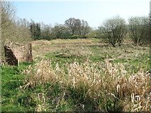 TG3204 : View across the Hellington and Rockland St Mary Community Reserve by Evelyn Simak