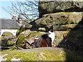TQ5639 : Rusthall Common cat by Marathon