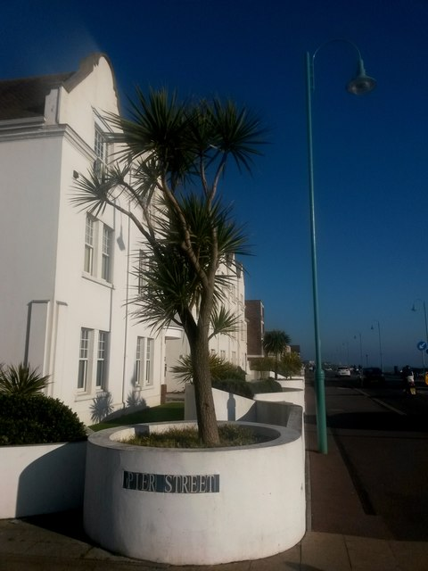 Lee-on-the-Solent: palm tree on the corner of Pier Street