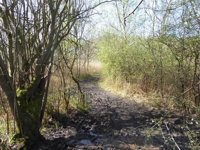Footpath in Fen Covert