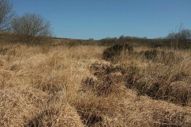 Tussocky bog, Mountsland Common
