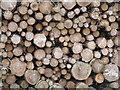 NN9018 : Forest harvest by M J Richardson