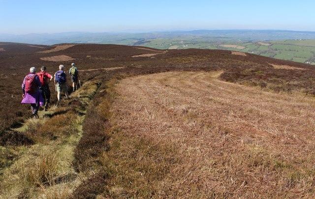 Heather clearance below Moel Morfydd
