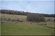 TQ1549 : Pasture by N Chadwick