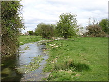 SU0195 : River Thames below Old Mill Farm by David Purchase
