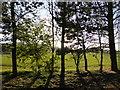 SK9743 : The sun behind the trees by Bob Harvey