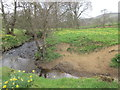 SE6697 : The River Dove and wild daffodils by Jonathan Thacker