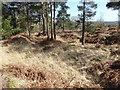 TQ4133 : Former marl pit on Ashdown Forest by Marathon
