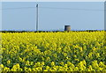 SK8790 : Corringham Windmill and oil seed rape crop by Mat Fascione