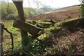 SX7163 : Field by Moorshead Brook by Derek Harper