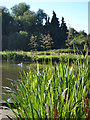 SP2964 : Summer at Kingfisher Pool, Myton, Warwick by Robin Stott