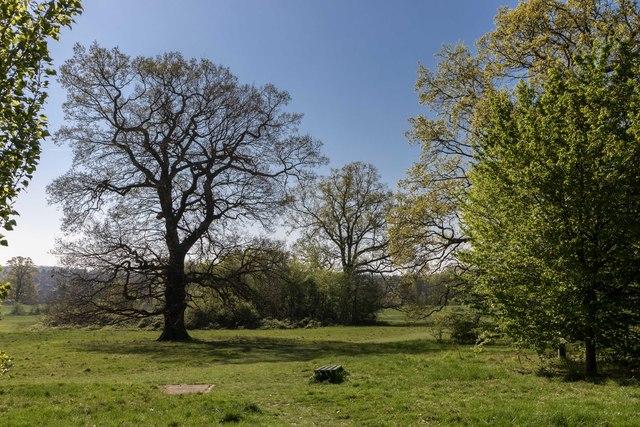 Oak Tree, Oakwood Park, London N14