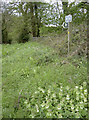 ST7659 : The nettles are flowering by Neil Owen